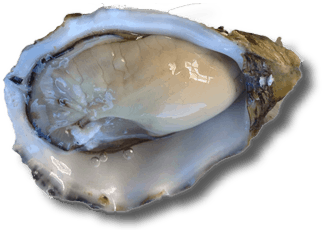 pacific-oysters-top-only 330w